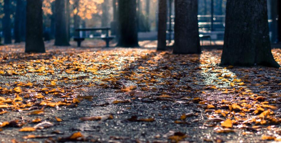 Danu Forest